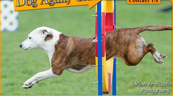 Central Okanagan Dog Agility Club