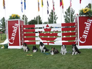 CODAC Nationals Shelties team.