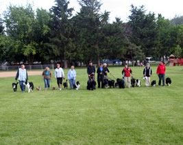 The CODAC crew at the Dog 'o' Pogo Agility Trial